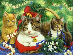 Kittens in Christmas - Desktop Nexus Wallpapers Christmas Animals, Christmas Cats, Christmas Holiday, Xmas, Kittens Cutest, Cats And Kittens, Hello Kitty Christmas, Winter Cat, Gatos Cats