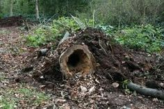 hedgehog house - Google Search