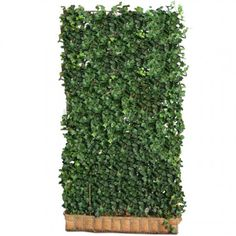 Ready Made Haag Hedera Helix Woerner Sun Plants, Shade Plants, Clematis, Hedera Helix, Trellis Panels, Living Fence, Garden Party Wedding, Love Garden, Bulb Flowers
