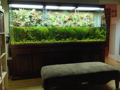 Put a bench in front of your tank. We spend a lot of time on ours looking at the Aquaplantarium.