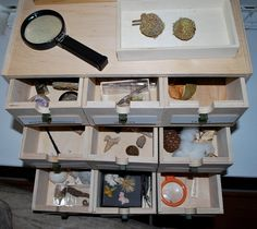 PL... discovery box for nature collection