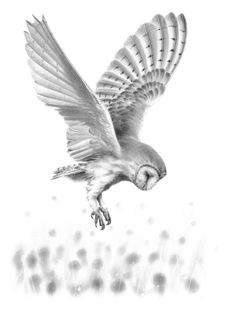 Barn Owl - Nolon Stacey