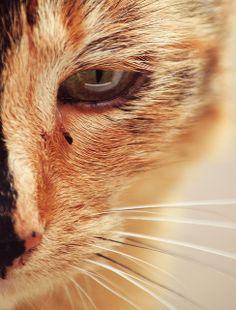 Toni    Cat