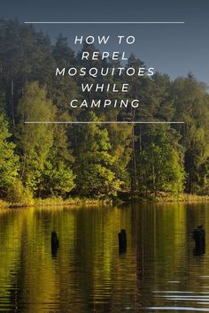 Mosquitoes are a part of summer. But use these tips to keep them away from your campsite. Cedarwood Oil, Cedarwood Essential Oil, Geranium Essential Oil, Diy Mosquito Repellent, Lemon Eucalyptus Oil, Keeping Mosquitos Away, Citronella Candles, Mosquitoes