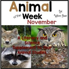 Animal of the week: November. A great supplement to your animal studies.