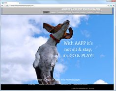 For all you pet lovers out there - check out Ashley Anne Pet Photography website for some amazing pics