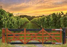 The Vineyard Gate - Select your size Timber Gates, Garden Bridge, Natural Beauty, Vineyard, Australia, Outdoor Structures, Nature, Wood Gates, Naturaleza