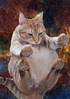 #cat meow nyan #space