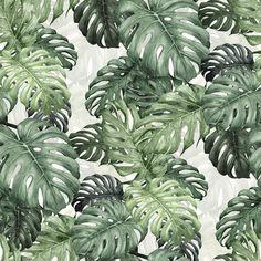Botany Monstera