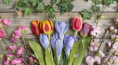 We carry a huge variety of silk flowers from Ivy to Orchids. Select from our huge collection of silk flowers including silk magnolia, tulips, orchids & daisy flowers and artificial gerbera daisies at wholesale price. Floral Supplies, Flowers Online, Gerbera, Cute Bunny, Craft Stores, Silk Flowers, Seasonal Decor, Magnolia, Tulips