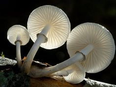 size: Photographic Print: Looking Up under the Gills of Toadstools of Porcelain Fungus, Cornwall, UK by Ross Hoddinott : Artists Framed Artwork, Wall Art Prints, Fine Art Prints, Framed Prints, Canvas Prints, Growth And Decay, Plains Background, Thing 1, Cool Posters
