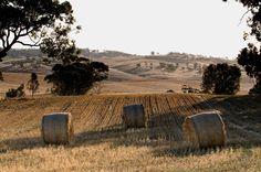 Google Image Result for http://lespeters.net/images/Landscapes/BarossaValleyHarvest_DSC0803-copy.jpg