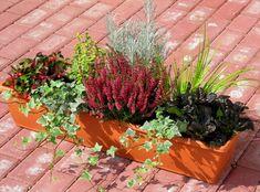 Balkonpflanzen_Herbst.jpg (1460×1080)