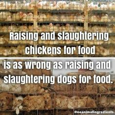 life is better vegan on Why Vegan, Vegan Vegetarian, Reasons To Go Vegan, Evolution, Vegan Quotes, Factory Farming, Stop Animal Cruelty, Vegan Animals, Stop Eating