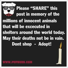 Don't breed or buy, while shelter animals die! There are so many pups out there…