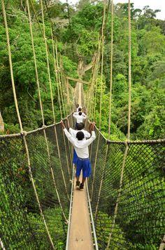 Kakum National Park, Ghana, Africa