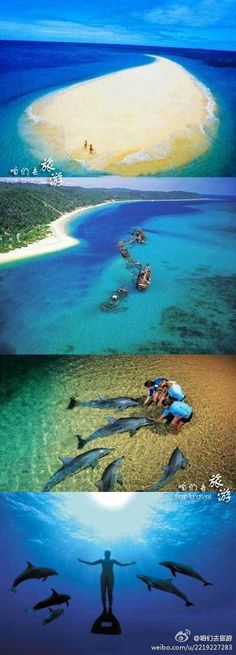 dolphin... ;)  坐落于距离澳洲阳光之都澳大利亚布里斯班30公里处的海面上,有一个小岛叫摩顿岛