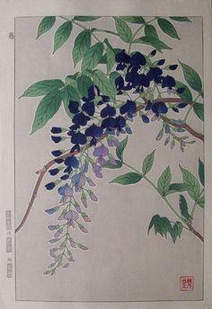 Wisteria | Japanese Woodblock Botanical | Shodo Kawarazaki