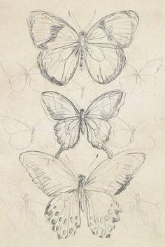 Vintage Butterfly Sketch I - Canvas Print