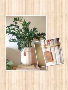 Mooie plantenpot, beetje van Leen, beetje van mezelf
