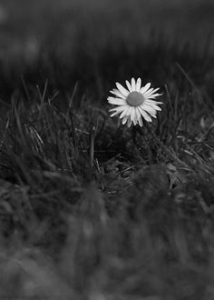 Meadows Landscape Black and White Daisy Daisy paysage live videos wallpaper Meadows Landscape Black and White Daisy Daisy paysage live Maron, Desktop Background Pictures, Gifs, Little Flowers, White Flowers, Live Wallpapers, Belle Photo, Black And White Photography, Mother Nature