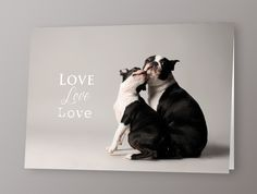Boston Terrier greetings card by The McCartneys Photography