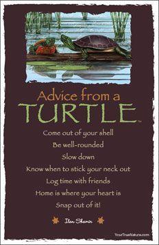 advice from a turtle - Google zoeken
