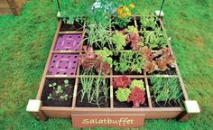 """Gemüseanbau in Holzrahmenbeeten Flat bed """"Standard"""", planted with the bed-set recipe """"salad buffet"""" (left). The plant template (right) specifies the distances Vegetable Bed, Backyard Vegetable Gardens, Herb Garden, Indoor Gardening, Vegetable Planters, Balcony Gardening, Organic Gardening, Gardening Tips, Garden Care"""
