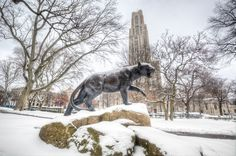 Dave DiCello Photography | University of Pittsburgh | Pitt Panther ...