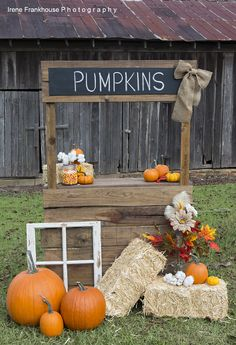 Photography Prop Pumpkin Stand                              …