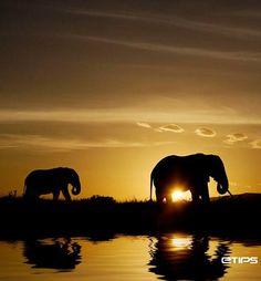 Simply breathtaking Kenya, Africa   by eTips #TravelApps