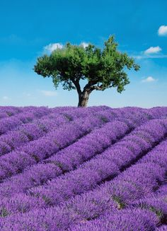 Features:  -Ideal Decor collection.  -Printed on vinyl coated paper.  -Paste included.  -Comes with 4 panels.  Product Type: -Wall mural.  Theme: -Trees & Flowers.  Color: -Purple; Blue.  Number of It