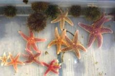 10 Surprising Facts About Starfish: Sea stars are Echinoderms.