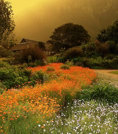 A Beautiful Natural Landscape Of Wild Flowers In Cape Town, South Africa Beautiful World, Beautiful Places, Beautiful Pictures, Beautiful Flowers, National Botanical Gardens, Dame Nature, Out Of Africa, Cape Town, Belle Photo