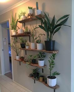 Room With Plants, House Plants Decor, Plant Decor, Plant Rooms, Room Ideas Bedroom, Bedroom Decor, Indoor Plant Wall, Plant Shelves, Aesthetic Room Decor