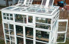 Une serre avec des fenêtres de récupération // http://www.deco.fr/actualite-deco/295260-serre-fenetres-recuperation-jardin-legumes.html #serre #jardin