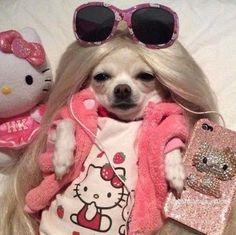Funny Animal Jokes, Funny Dog Memes, Cute Memes, Cute Funny Animals, Funny Dogs, Baby Animals Super Cute, Cute Baby Dogs, Cute Dogs And Puppies, Cute Little Animals