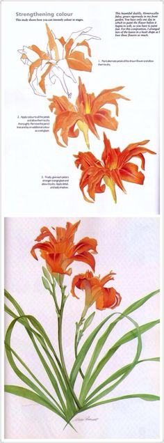 Painting a day lily by Billy Showell
