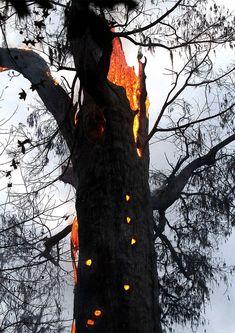 Een boom die van binnen uit brand..