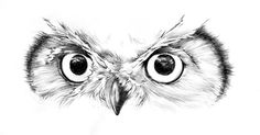 Owl by Murillo Chibana Bird Drawings, Animal Drawings, Cute Drawings, Tattoo Drawings, Tattoos, Sketch Tattoo Design, Owl Tattoo Design, Tattoo Sleeve Designs, Animal Sketches