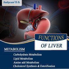 #LiverFunction: Carbohydrate metabolism, Lipid metabolism, Amino add metabolism, Cholesterol synthesis and esterification.  #AyurvedicMedicineForLiver #HerbalMedicineForLiver