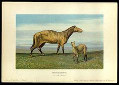 Protorohippus - Early Prehistoric Animal and Dinosaur Pictures