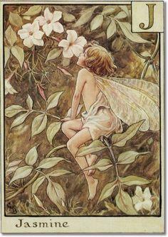 Cicely Mary Barker - The Flower Fairy Alphabet - The Jasmine Fairy Archival Fine Art Paper Print