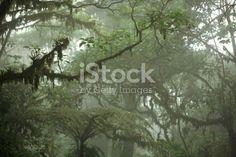 Tropical Rain Forest Canopy stock photo 140064991   iStock