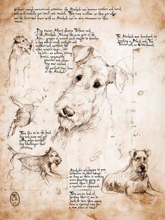 Airedale Study - Framed Giclee print on archival paper. From an original drawing in the style of Leonardo Da Vinci