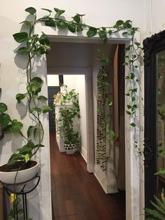 Zimmerpflanzen hanging plants, indoor plants, outdoor plants The Pros And Cons Of An Electrostatic A Deco Studio, House Plants Decor, Plants In The House, Vine House Plants, Outdoor Plants, Plants Indoor, Indoor Plant Decor, Indoor Climbing Plants, Garden Plants