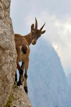 AstroSpirit / Capricorn ♑ / Earth / Mountain Goat