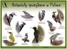Paper Dolls, Flora, Birds, Education, Animals, Scrapbooks, Biology, Journals, Sign
