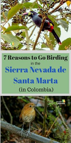 This is the best area to go birding in Colombia!
