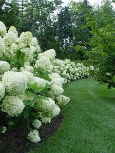 Labor Junction / Home Improvement / House Projects / Garden / Outdoor / House Remodels / Beautiful white hydrangea border. Labor Junction / Home Improvement / House Projects / Garden / Outdoor / House Remodels / Amazing Gardens, Beautiful Gardens, Landscape Design, Garden Design, House Landscape, The Secret Garden, Pinterest Garden, Garden Cottage, Garden Borders